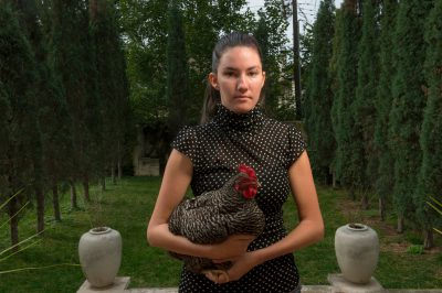 Photo: A young woman holds a barred rock hen chicken.