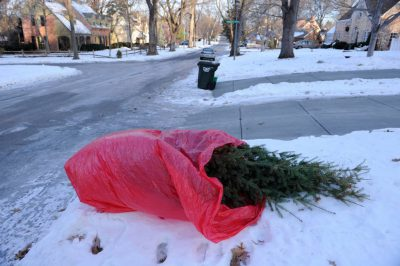 Photo: A dead Christmas tree sits by the curb, waiting to be picked up by trash collection.