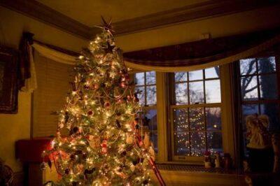 Photo: A Christmas tree lights up a living room.