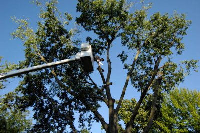 Photo: A man trims trees in a utility basket in Lincoln, Nebraska.