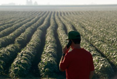 Photo: A soybean farmer looks over his field while talking on a cell phone.