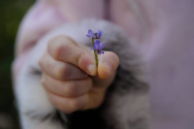 Photo: A 10-year-old girl holds a late-season violet.