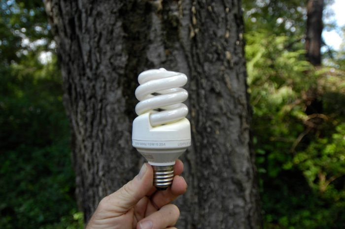 Photo: A man holds up an energy efficient lightbulb.