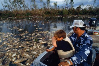 Photo: A father and son view a fish kill, some of the 182 million fish which suffocated when organic matter depleted the oxygen supply in the Atchafalaya river basin after hurricane Andrew.