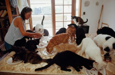 Photo: A woman feeds 23 cats that are now homeless after hurricane Andrew, which she has adopted.