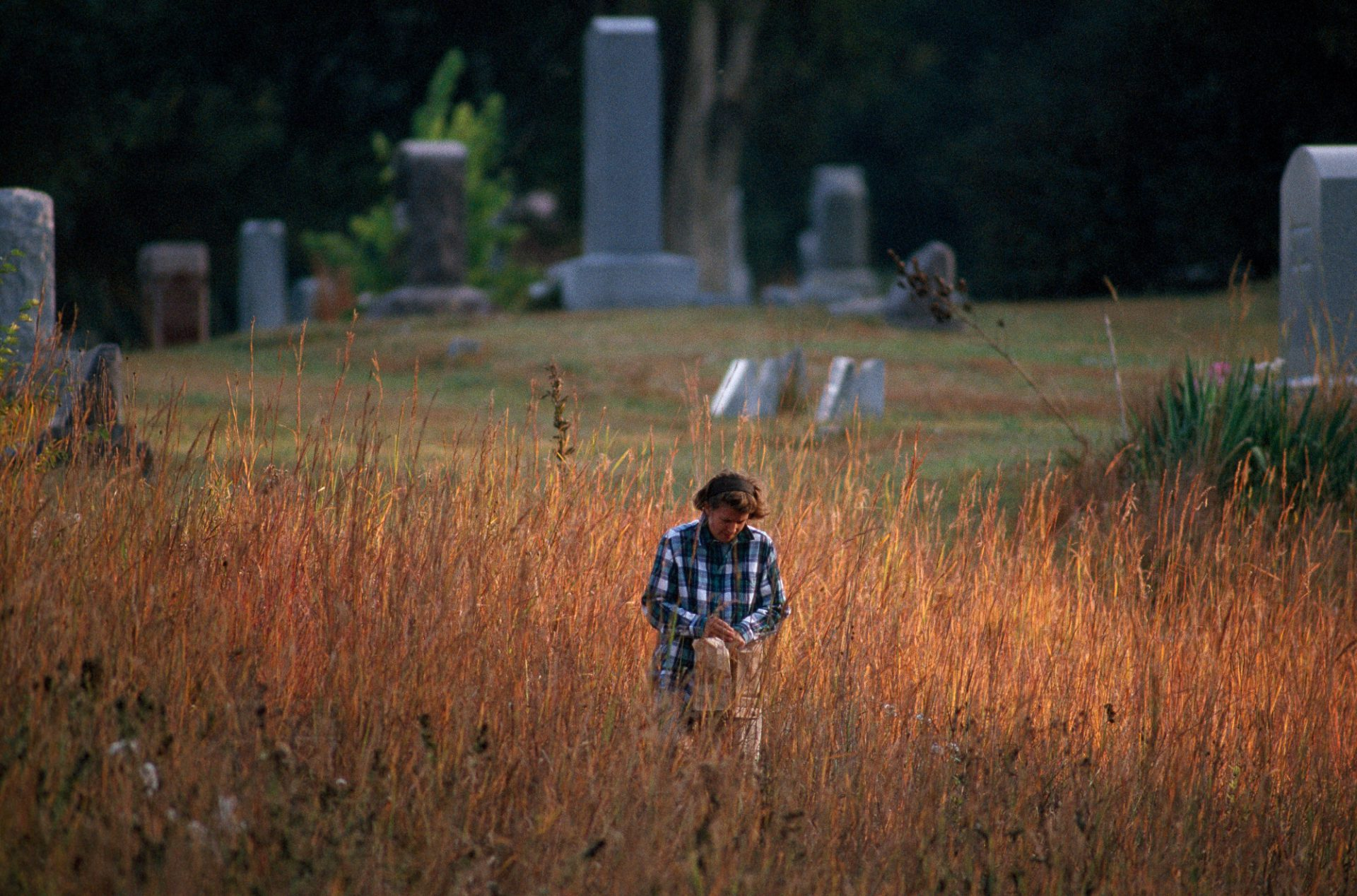 Photo: A volunteer collects seeds from wildflowers and native grasses to plant.
