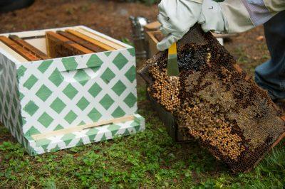 Photo: A beehive in Lincoln, Nebraska.