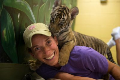 Picture of a woman with an endangered, eight-week-old Bengal tiger (Panthera tigris tigris) cub at the Alabama Gulf Coast Zoo.