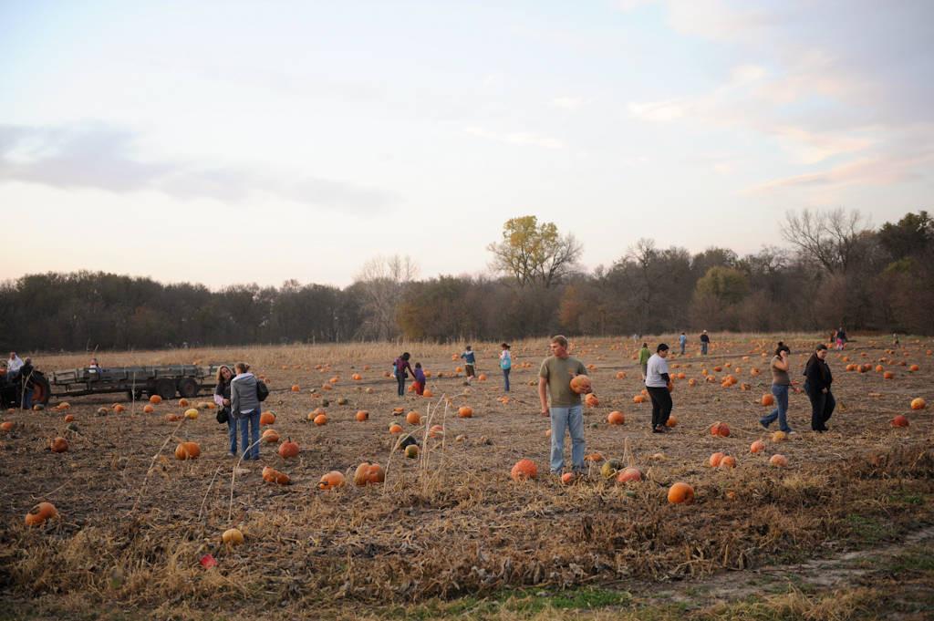 Photo: People picking pumpkins at Roca Berry Farm in Roca, NE.