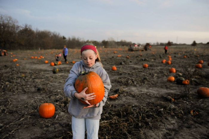 Photo: An adolescent girl holds a pumpkin at Roca Berry farm in Roca, NE.