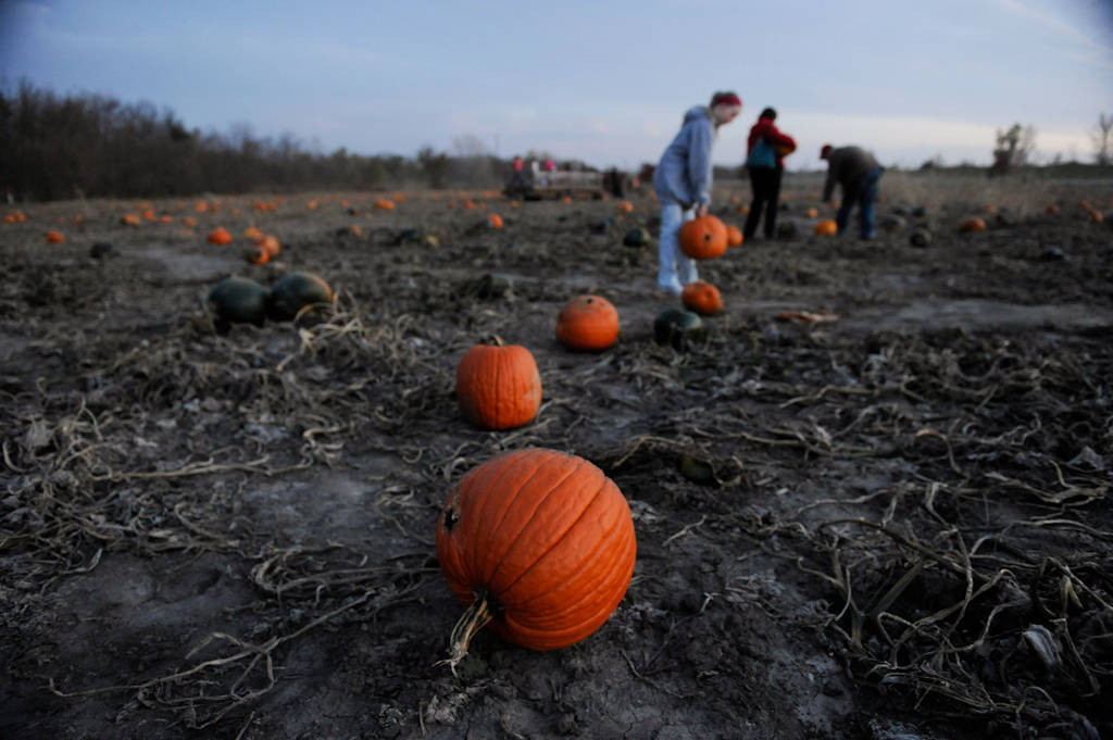Photo: A mother and daughter look for pumpkins at the Roca Berry Farm pumpkin patch in Roca, NE.