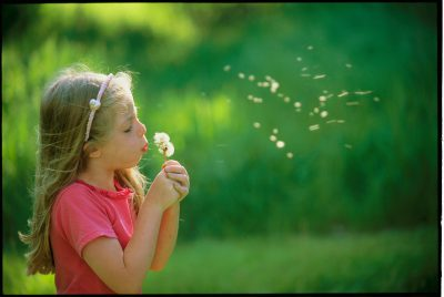Photo: A girl blows the seeds off of a dandelion seedhead.