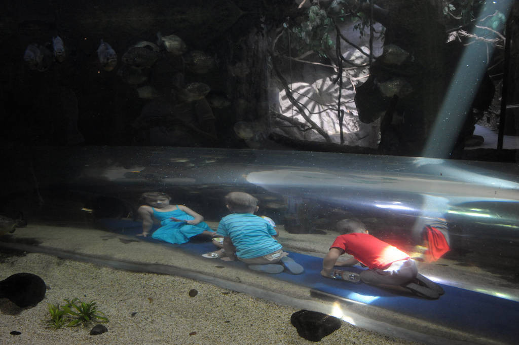 Photo: Children crawl through a tunnel inside a huge aquatic exhibit at the Houston Zoo.