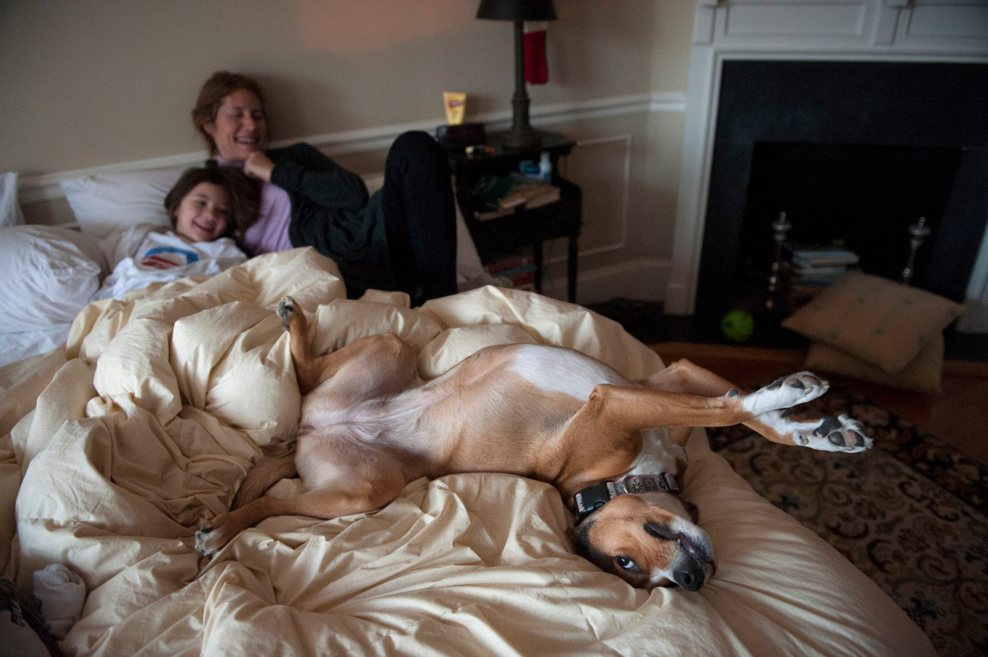 Photo: A dog stretches in bed in Washington, DC.