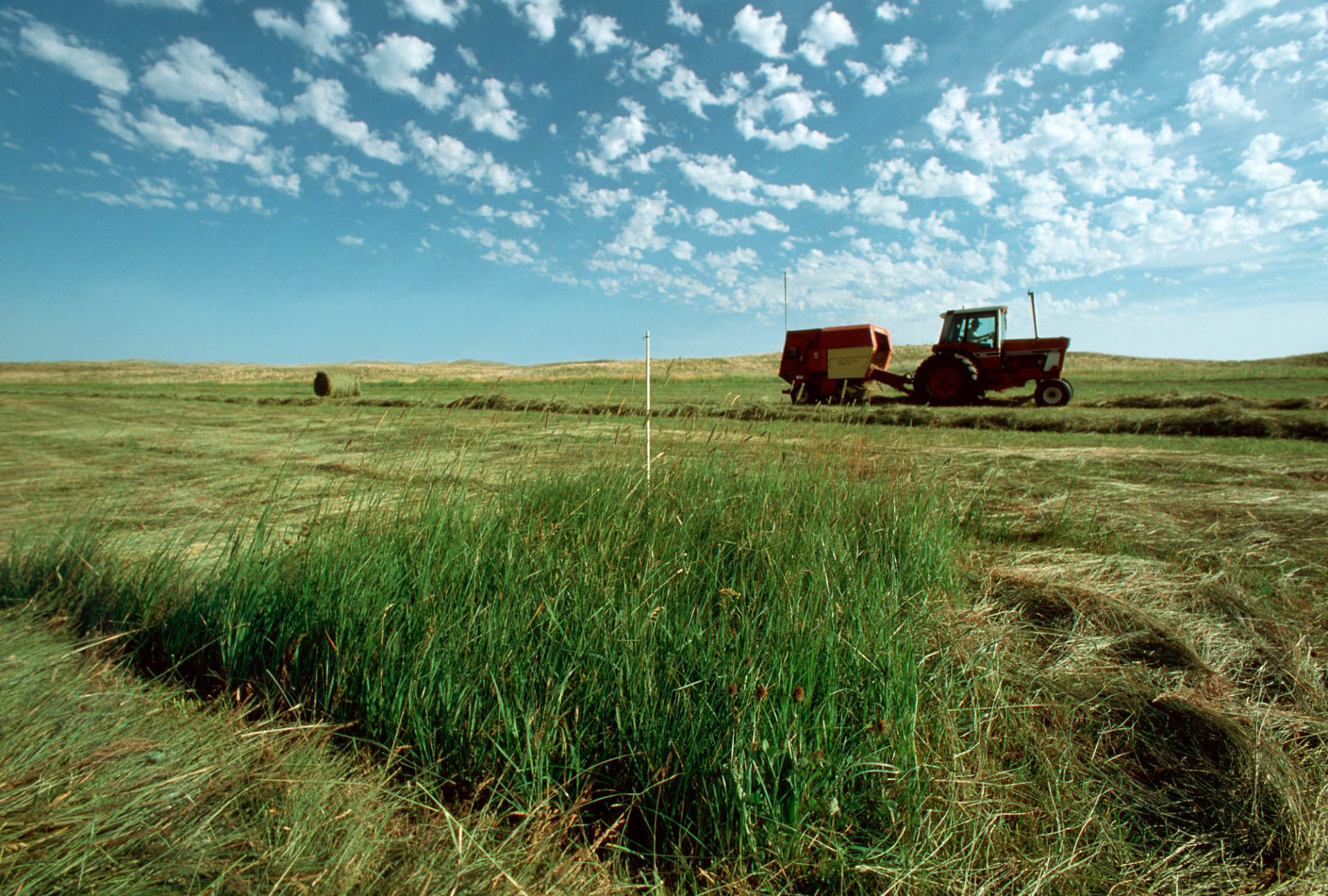 Photo: Stakes mark sites of the endangered Western prairie fringed orchid; farmers in the Nebraska sandhills work around the plant.