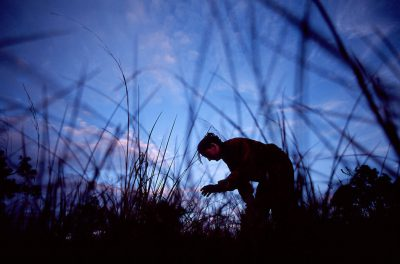 Photo: A botanist with endangered cutthroat grass at Archibold Biological Station near Lake Wales, Florida.