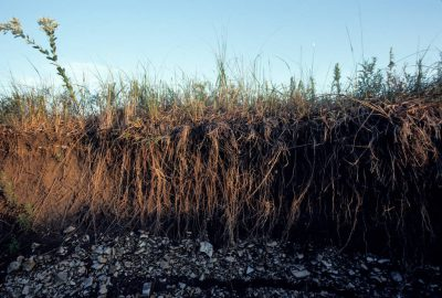 Photo: A section of earth fell away near a creek bank, revealing the complex root system of prairie grasses (mostly big bluestem) in the Flint Hills of Kansas.