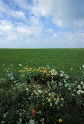 "Photo: Grasses around a ""Mima mound"" covered with various prairie flowers near Paris, Texas."