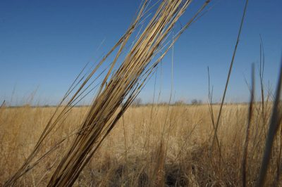 Photo: A planted tallgrass prairie set aside for CRP (Conservation Reserve Program) at Waveland Farm near Walton, NE.