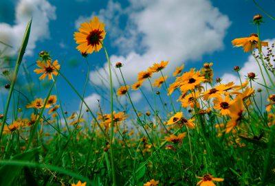 Photo: Wildflowers.