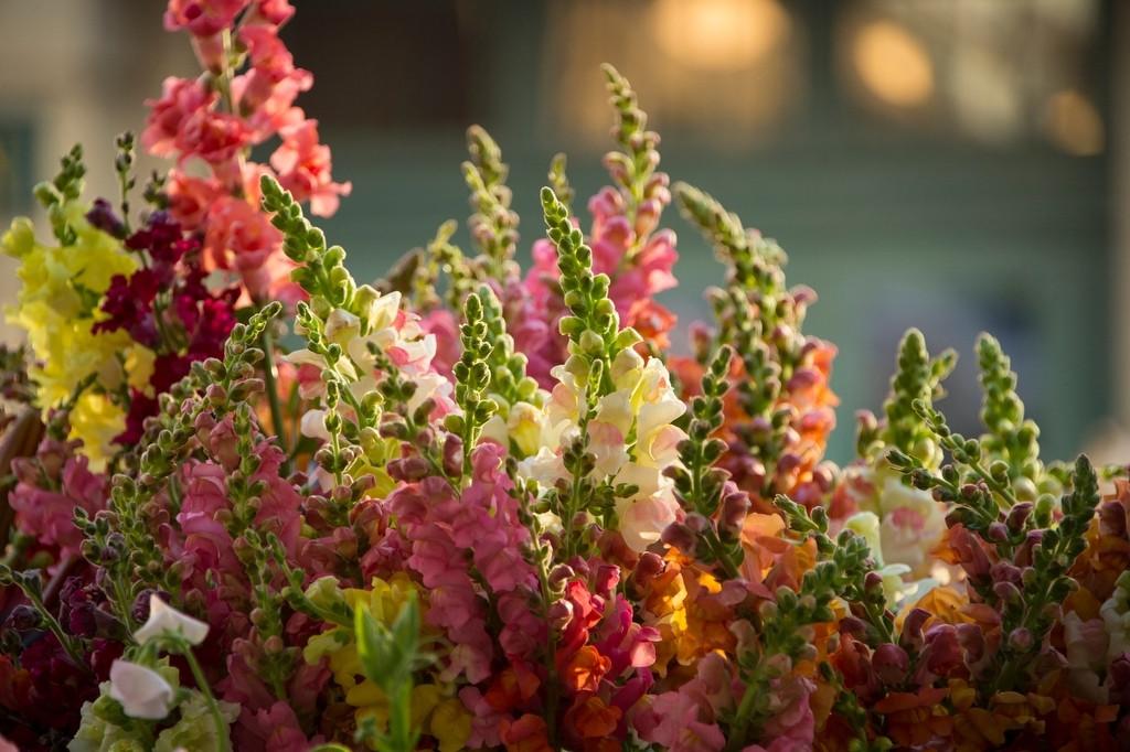 Photo: Flowers at the Farmer's Market in the historic Haymarket district of Lincoln, Nebraska.