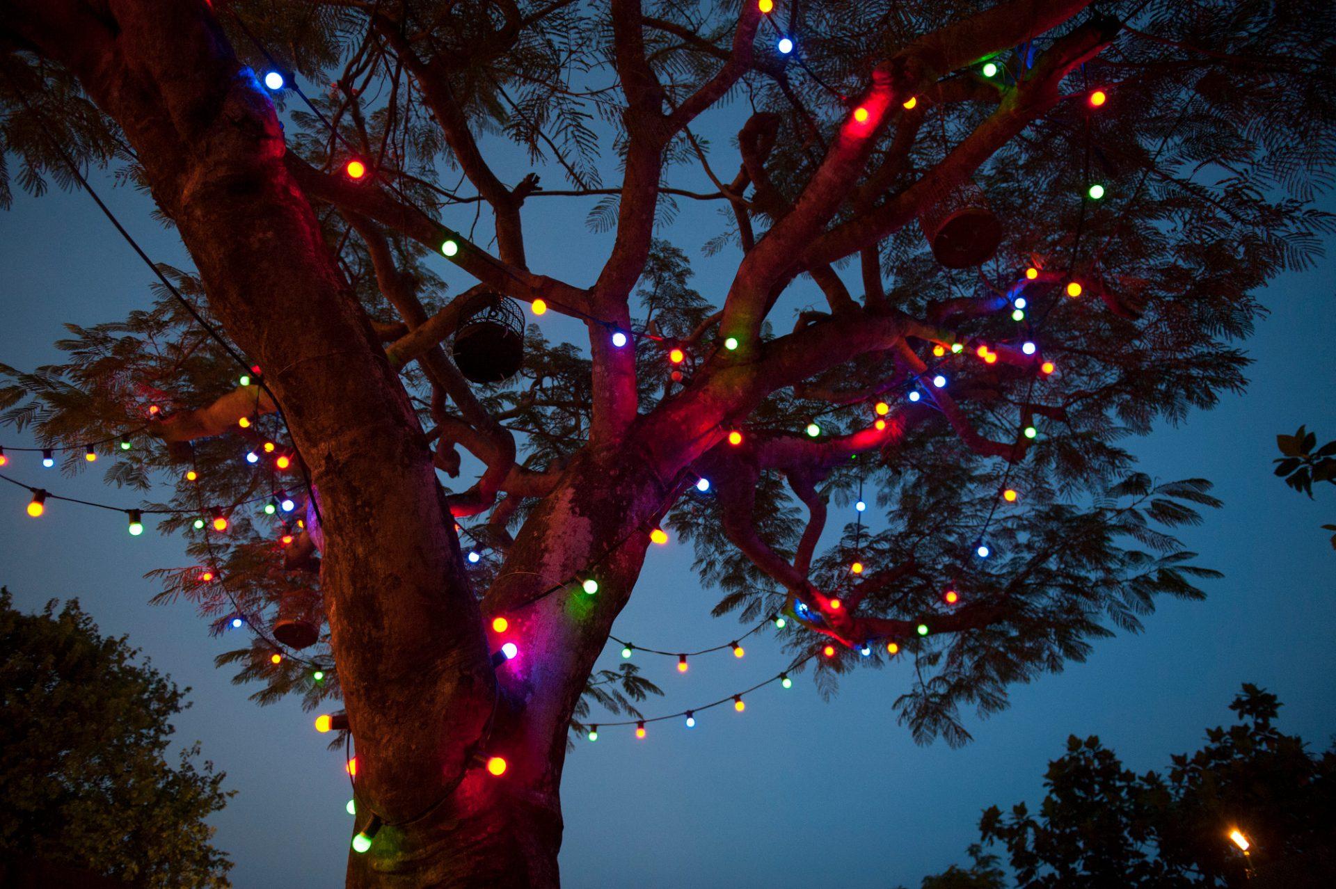Photo: Lights cover a tree at Ocean Park, Hong Kong, China.