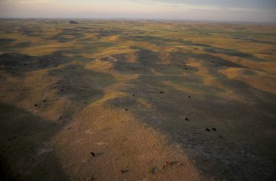 Photo: Aerial of cattle on a ranch in Nebraska's Sandhills.