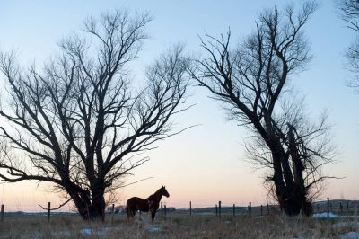 Photo: A horse stands still in the distance at sunset.