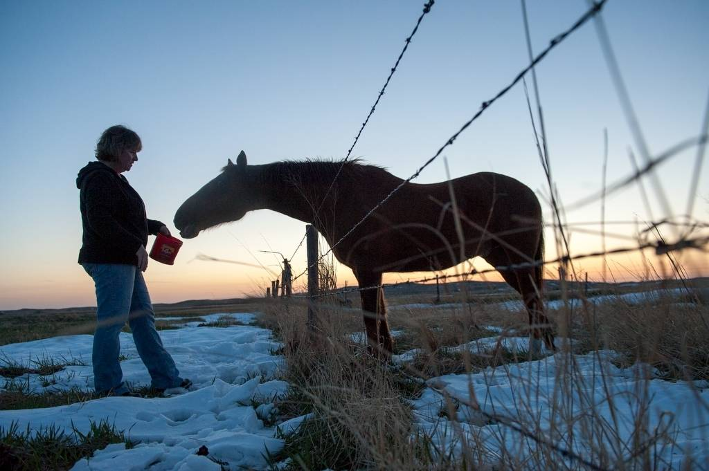 Photo: A woman feeds an eager horse at sunset.