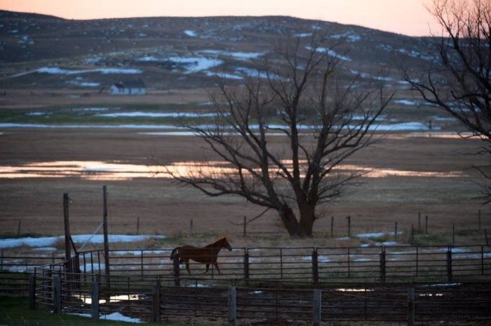 Photo: A horse trots around an enclosure on a ranch.