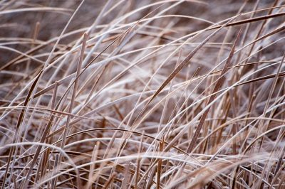 Photo: Marsh grass on a ranch in the Nebraska Sandhills.