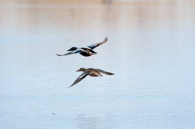 Photo: Wildlife fly over water on a ranch in the Nebraska Sandhills.