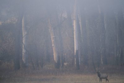 Photo: Elk in Charles M. Russell NWR in Montana.