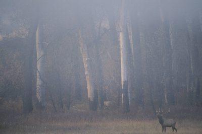 Photo: Elk in Charles M. Russell NWR in Montana.