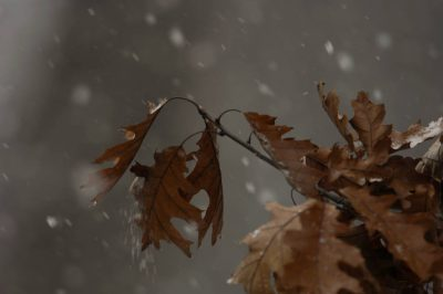 Photo: The first snow in Lincoln, NE.