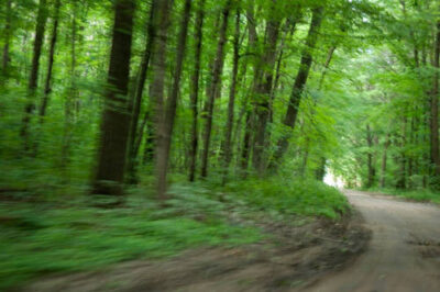 Photo: A rural dirt road by Leech Lake in Minnesota.