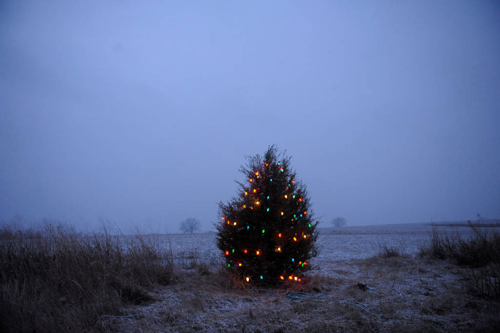 Photo: A tree decorated with Christmas lights at a farm in Cortland, NE.