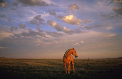 Photo: A horse stands by a barbed wire fence in the sunset light.