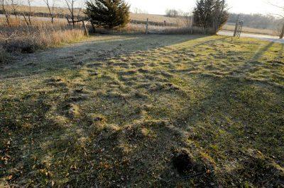 Photo: Mole paths are seen in grass at the Waveland Farm near Walton, Nebraska.