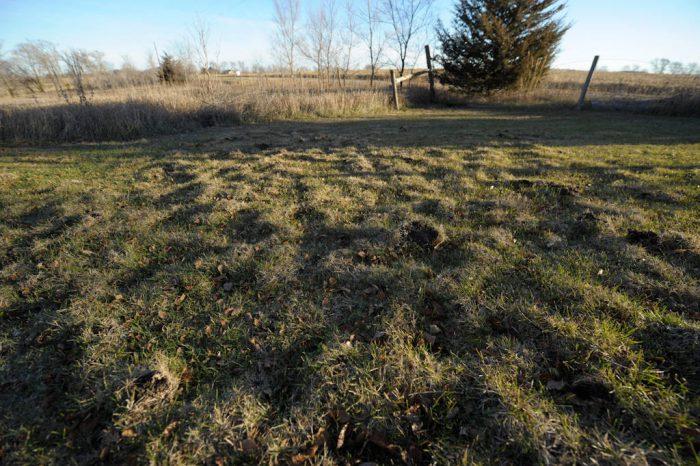 Photo: Mole tunnels in the lawn at Waveland farm, Nebraska.