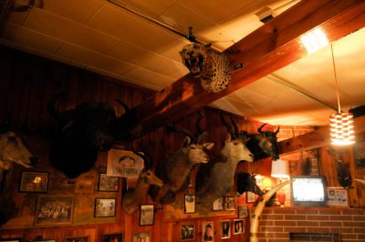 Photo: Taxidermy on walls of Ole's Big Game Bar and Grill in Paxton, Nebraska.