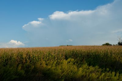 Photo: A corn field near Ceresco, Nebraska.