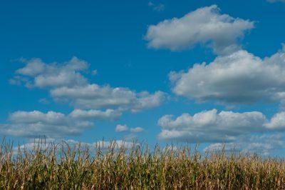 Photo: Cumulus clouds drift slowly across a Nebraska cornfield.