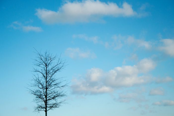 Photo: A tree that has lost its leaves, Chantilly, Virginia.