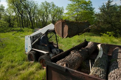 Photo: A forklift loads walnut logs into a trailer on a far.
