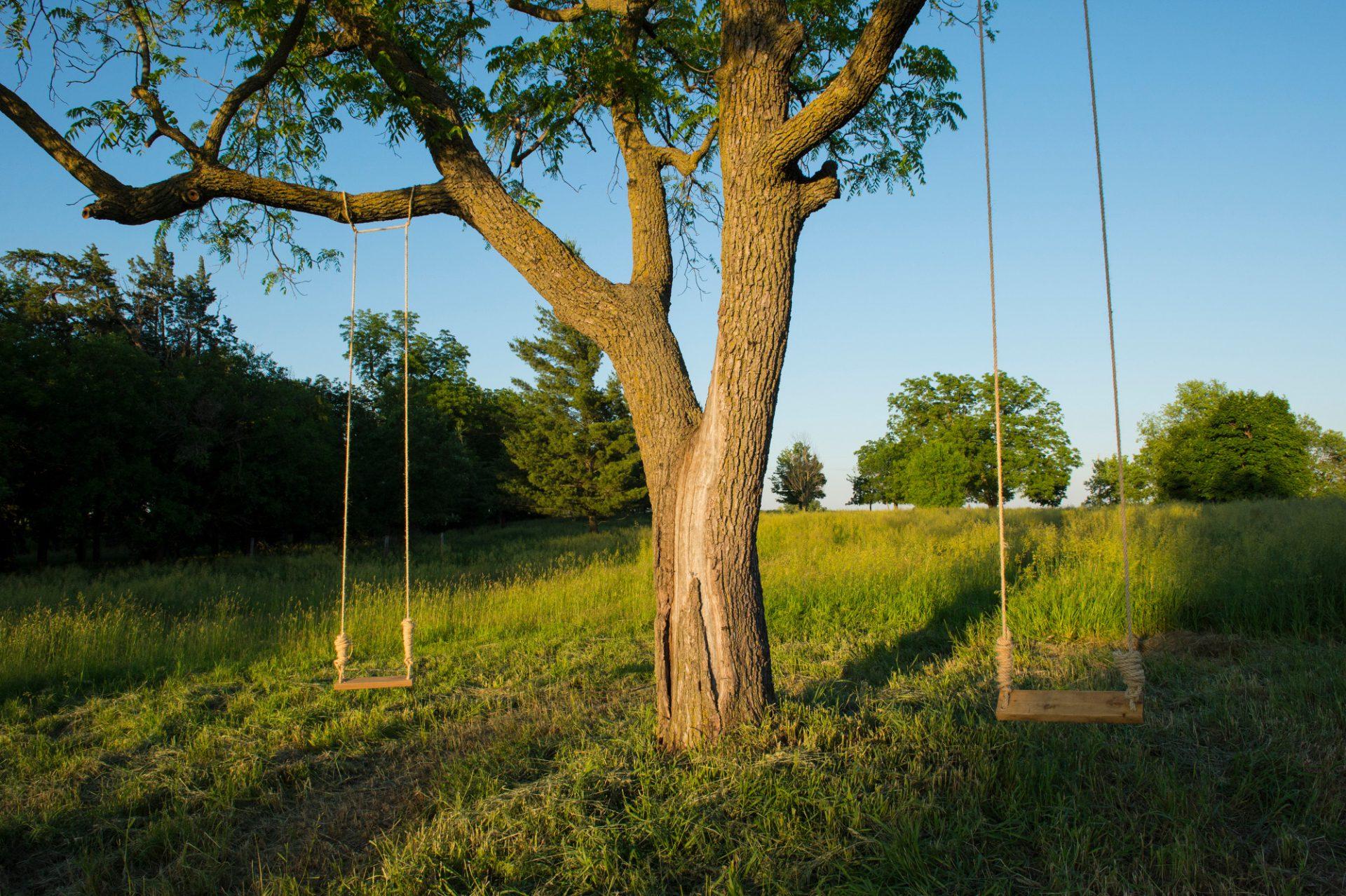 Photo: Tree swings sway in the wind.