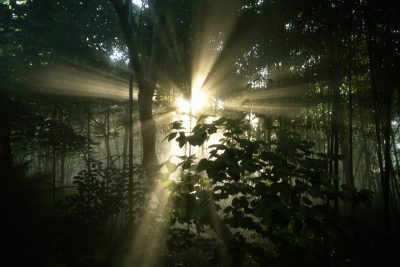 Photo: Rays of sunlight filter through trees in Cincinnati, Ohio,.