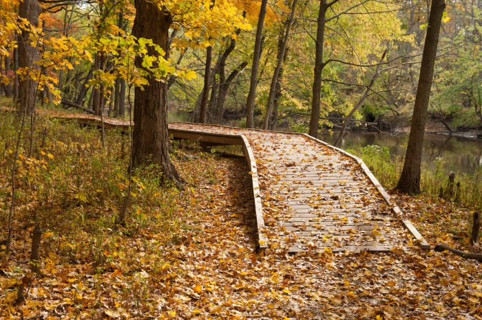 Photo: Fall foliage at Ryerson Woods in Illinois.