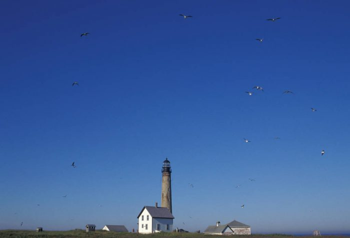 Photo: The 180-foot lighthouse is a centerpiece at Petit Manan NWR in Maine.
