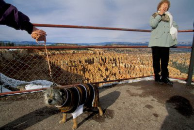 Photo: Tourists - including a sweater-wearing terrier - at Bryce Canyon National Park, Utah.